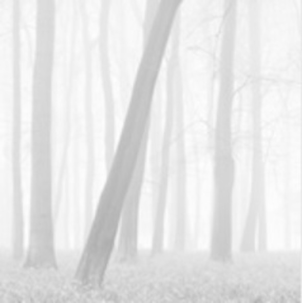 Doug Chinnery_MORNING MISTS I