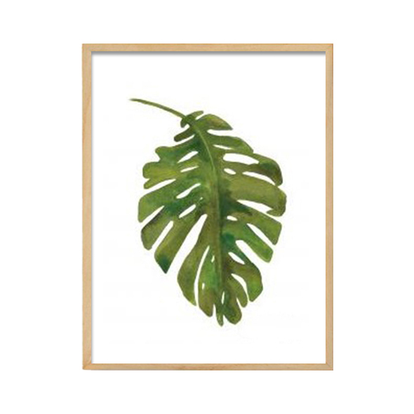 abc collection_Tropical leaf